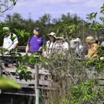The boardwalks on the Anhinga Trail in the Everglades and Corkscrew Wildlife Sanctuary made exploration of these swamps much easier.