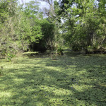 Corkscrew Swamp brings visitors into close contact with some of Florida's most beautiful, remote wetlands..