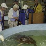 Alice Cook examines a marine sea turtle recovering from injuries in the wild and recuperating in SeaWorld's quarantine facilities.