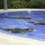 Rescued pilot whales who were stranded in the Florida Keys were brought to SeaWorld in hopes that they would recover and reveal to scientists and veterinarians the mysteries of why these species frequently beach themselves in shallow waters.