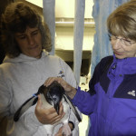 "Barb Lange makes a new friend in the penguin encounter in SeaWorld's ""Antarctica"" exhibit."